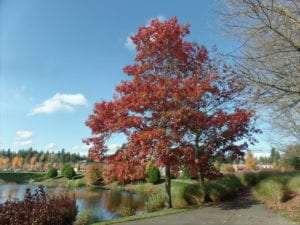 Lacey WA foliage