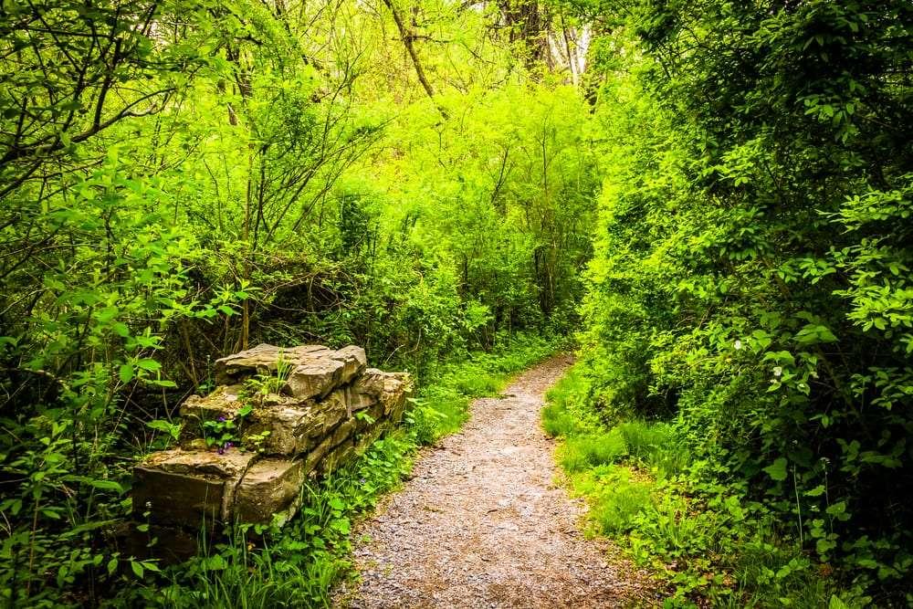 Pathway in Wildwood Park